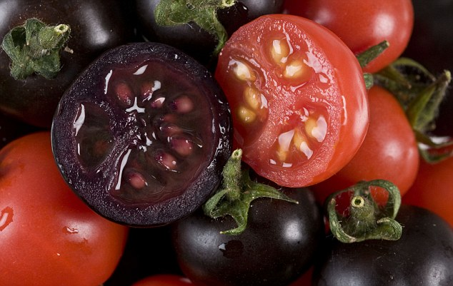 The purple tomatoes have anti-inflammatory effects and were shown to slow down cancer in mice. They also have double the shelf life