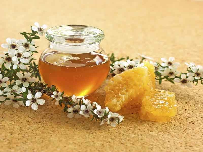 honey on an empty stomach benefits
