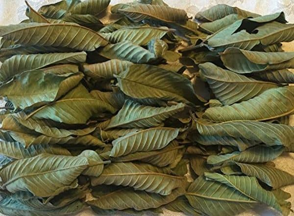 How to dry guava leaves for tea