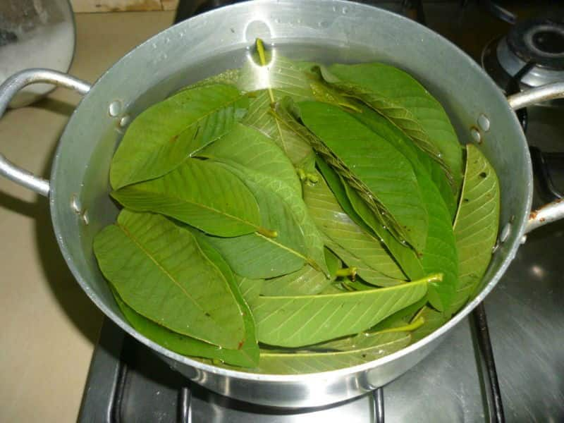How to prepare guava leaf tea from fresh leaves