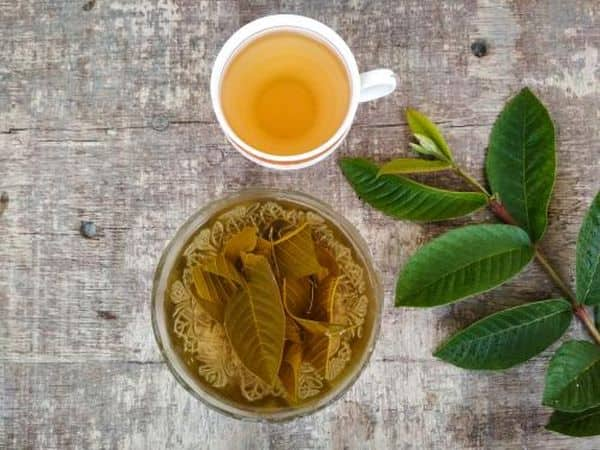 Fresh guava leaves tea: how to make this drink to enjoy benefits
