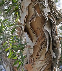 купить препарат масло чайного дерева ВитаЛайн (Vitaline), купить препарат масло чайного дерева ВитаЛайн, купить препарат масло чайного дерева Vitaline, купить препарат масло чайного дерева